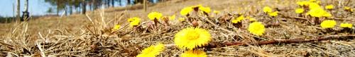 kielce wiadomości Coraz cieplej - idzie wiosna