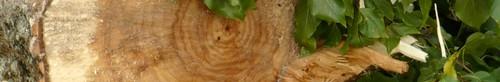 wiadomości Kielce betonową pustynią? - kolejna wycinka drzew
