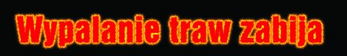 kielce wiadomości NIE! dla wypalania traw