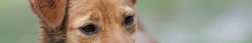 kielce wiadomości W upale pamiętajmy o zwierzętach