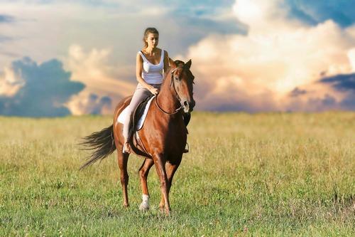 kielce wiadomości Nim wsiądziesz na konia. Cenne wskazówki dla początkujących