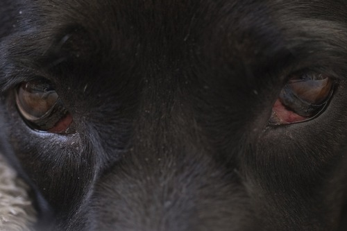 kielce wiadomości Odpowie za zabicie psa. Grozi mu 5 lat