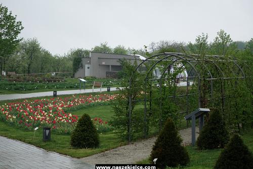 kielce wiadomości Pogoda pokrzyżowała otwarcie Ogrodu Botanicznego (ZDJĘCIA)