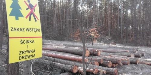 kielce wiadomości Trwa wycinka drzew na kieleckim Stadionie Leśnym (ZDJĘCIA)