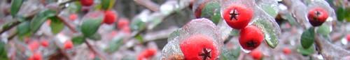 wiadomości Kielce- lodowa kraina (zdjęcia)