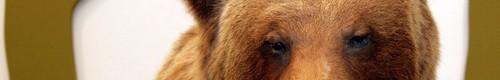 Otwarcie wystawy wypchanych zwierząt i protest przeciw myślistwu-zdjęcia,video