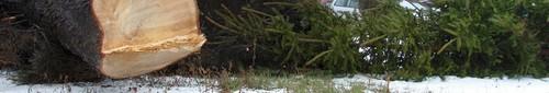 kielce wiadomości Rozpoczęła się wycinka drzew przy ulicy Krakowskiej w okolicy