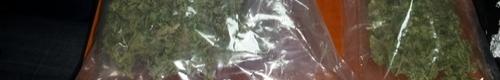 kielce wiadomości Celny cios w narkotykowy proceder- marihuana i kokaina nie tra