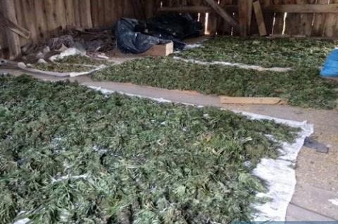 kielce wiadomości Policjanci zabezpieczyli w tydzień ponad 160 kg narkotyków