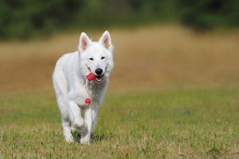 kielce wiadomości Jaki mandat za nieposprzątanie po psie w Kielcach?