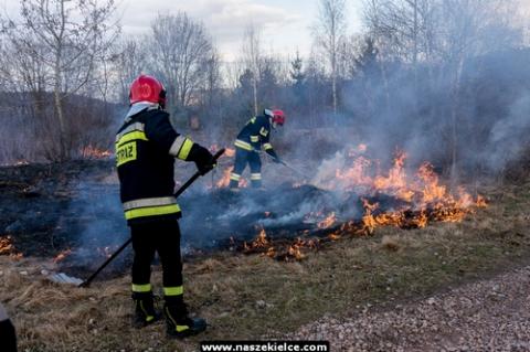 kielce wiadomości Strażacy walczyli z pożarem łąk (ZDJĘCIA)