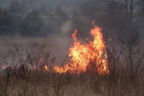 kielce wiadomości Strażacy przypominają: nie wypalajmy traw!